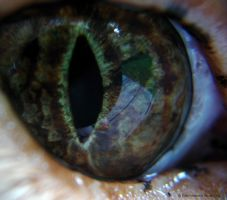 Cat's Eye by bleste