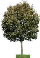 tree 28 png by gd08