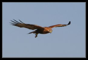On a wing by invisiblewl