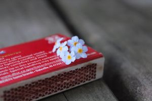 Forget-me-not flowers on a matchbox by Cawillsea