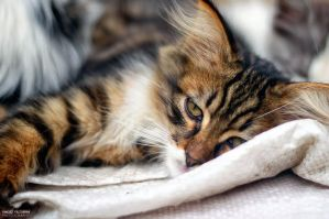 Sleeply Cat by yagizyildirim