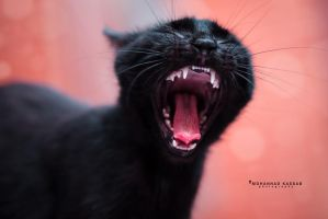 The real meaning of black cat by MohannadQassab