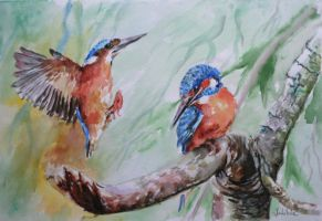 Kingfishers by danuta50