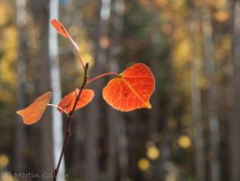 Aspen fall by MartinGollery