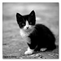 Stray Cats in Istanbul - I by jevigar