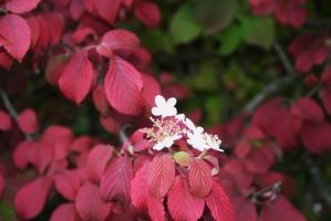 red leaves and white blooming by ingeline-art