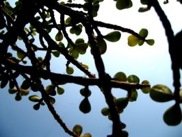 plant with tiny leaves by thesarim1