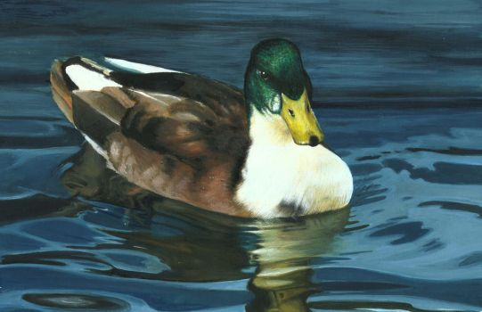 DUCK ON THE WATER by AlexanderLevett