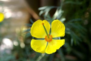 Yellow Flower II by expression-stock