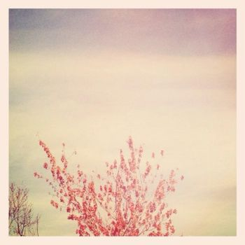 Red Tree, Blue Sky by shelbyysmackdown