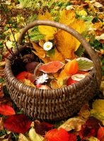 Basket full of autumn by Meireis