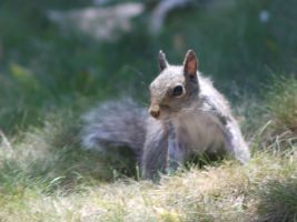 Squirrel Exclamation Mark by dseomn