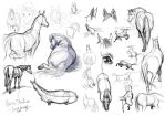Horse Studies by ShesscaMayWiver