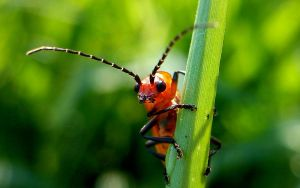 Cute Beetle by ahape