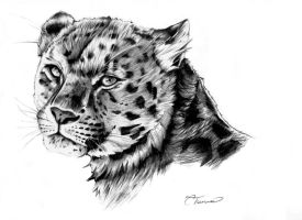 Leopard by Ettelloc