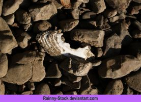 shell in rocks- STOCK by Rainny-Stock