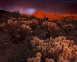 Gift of light by PeterJCoskun