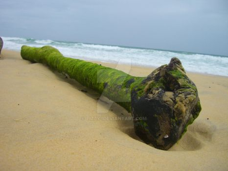 Washed up by tizzy-