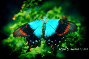 turqouis butterfly by adjieguswara-art