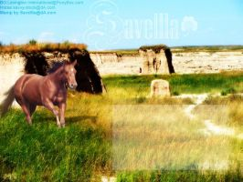 My Spring Layout by Savellla