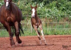 as fast as mummy by LisaFPhotography