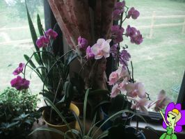 ORCHID ARMY OF DEATH! by askKittenPrincess