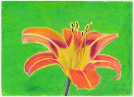 Orange Daylily by Melancholy-Man