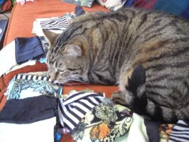 Sitting on the Quiliting Project by mattiemoonflower