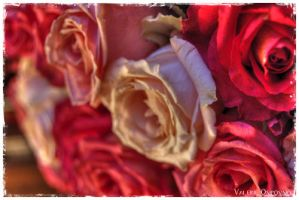 Dead roses by Sartr