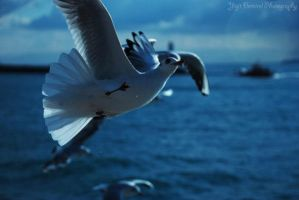 Seagull and Mosque-3 by tahaerakay