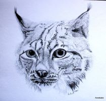 Lynx drawing by Anbeads