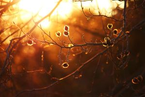 Sunlit Branches by PhotonicBohemian
