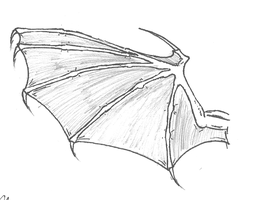 Succubi/Incubi wing concept image by dracorotor