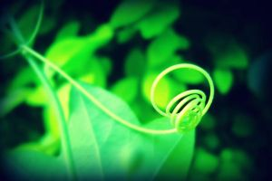 A Lush Green Curl by Isika