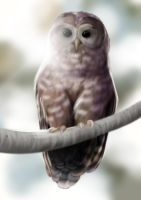 Spotted owl by Lunarye