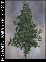 Fir Tree 002 by poserfan-stock