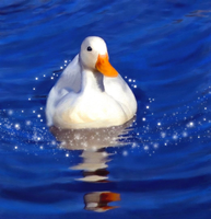 White Duck by allison731