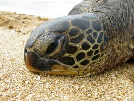 Tired Sea Turtle by X5-442