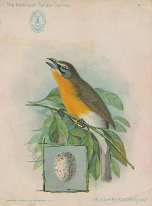 Victorian Advertising Card - Yellow Breasted Chat by Yesterdays-Paper