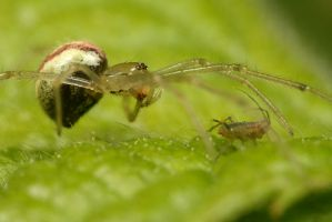 Spider and Aphid by Alliec