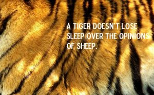 A Tiger Doesn't Lose Sleep Over the Opinions... by LovelyTwistofNature