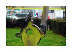 Two Grave Pigeons by thejamcascru
