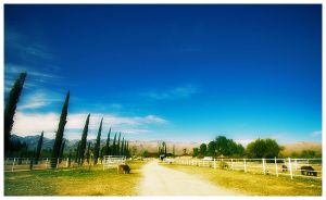 Pretty Day in Tucson part 2 by prologic77