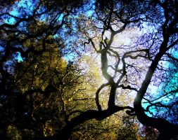 Tree Spirit by SeanAnomie