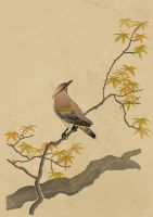 Koson's Waxwing by DrStein