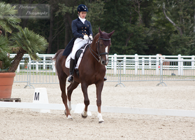Dressage Cup_8 by CalyHoney