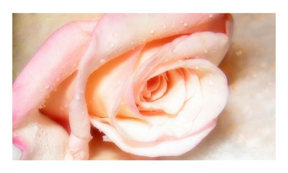 A Rose Is A Rose by Marita-Covarrubias