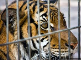 Caged Beast by floggerSG