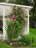 Clematis 1 by racehorse87-stock