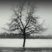 Snow tree.. by lostknightkg